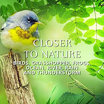 Closer to Nature: Relaxing Music of Grasshopper & Birds, Frogs, Ocean & Sea Waves, Crickets Sound for Massage & Relaxation in Spa & Wellness Center, Rain to Calm Down, Natural Sleep Aid