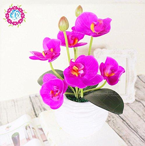 50 pcs Iris graines, graines de bonsaï fleurs vivaces de jardin, magnifiques fleurs coupées graines rares de fleurs pour la plantation jardin maison orchidée 3