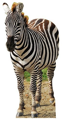 Jungle Safari Zebra Cardboard Cutout Standee Standup Prop Party Supplies Decorations Decor Backdrop Background