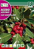 Semilla Acebo (Ilex) - Rocalba