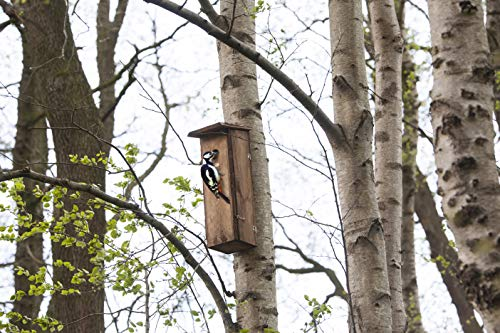Woodpecker Nistkasten Vogelhaus Kiefernholz FSC 100% Wildlife