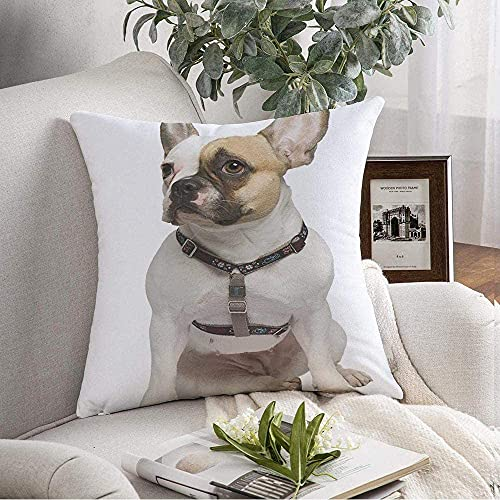 Funda de almohada Cozy French Bulldog Shot 1 año sentado en el frente Corte Nadie Raza blanca Transporte Animales Vida silvestre Throw Pillow Funda de cojín para sofá Decoración del hogar, 18  x 18