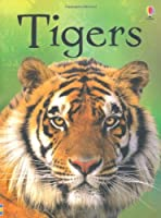 Tigers (Beginners) by James Maclaine(2012-06-01)