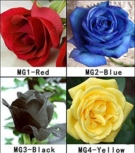 Portal Cool 1 Paquete de 4 Colores 80 Semillas Semillas Color de Rosa