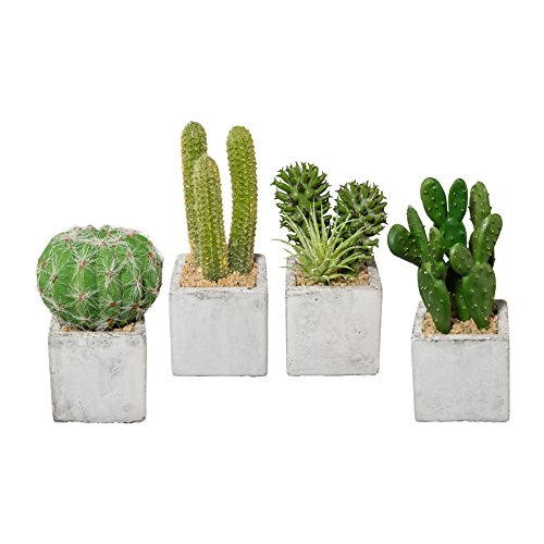 creativ home Kunstpflanze KAKTEEN im ZEMENTTOPF getopft. 4 x Kaktus ca 10-13 cm.