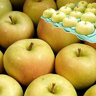 青森 りんご 3kg箱 トキ 家庭用 青森県産リンゴ3キロ箱 大小様々