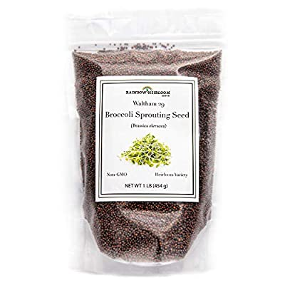 Broccoli Sprouting Seeds for Broccoli Sprouts & Microgreens   Waltham 29 Variety   Non GMO Heirloom Seeds   Perfect for Sprouting Jar & Seed Tray   Rainbow Heirloom Seed Co.