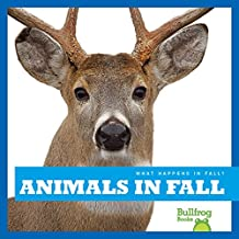Best animals in fall Reviews