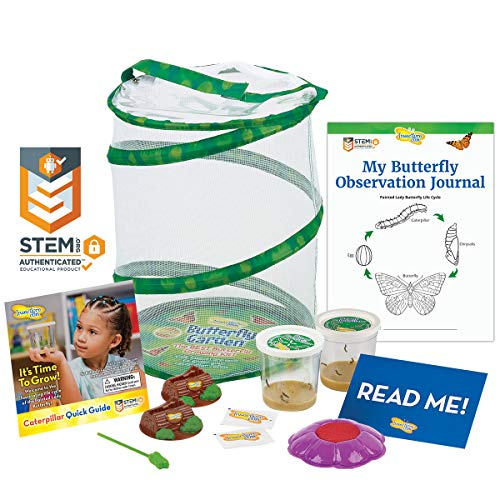 Top Science Education Insect Kits
