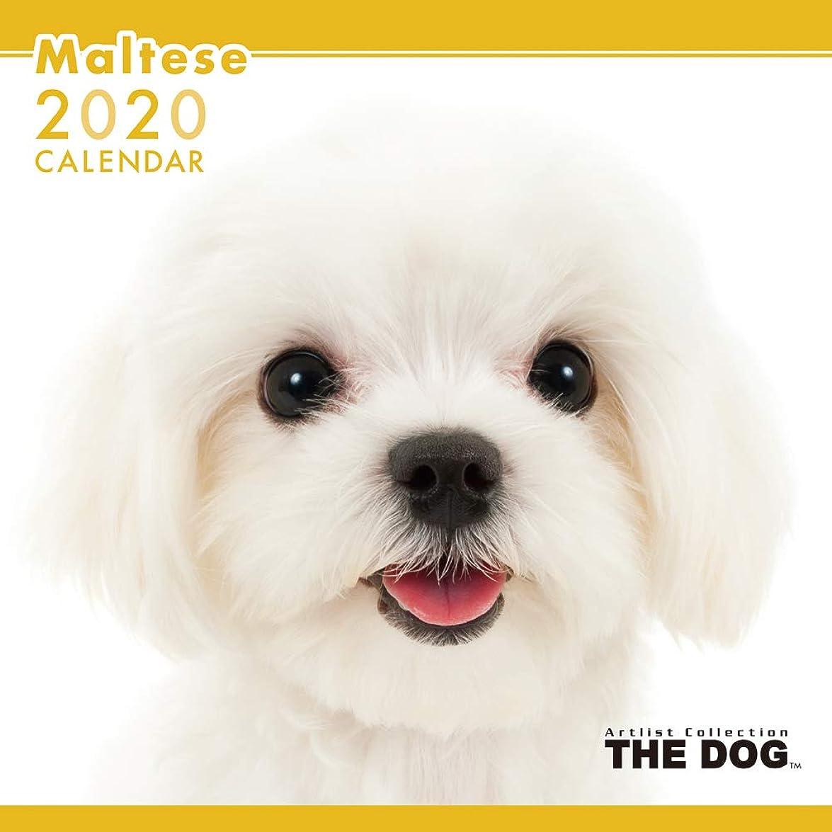 バラ色海港軽食THE DOG カレンダー マルチーズ 2020年カレンダー CL-1121