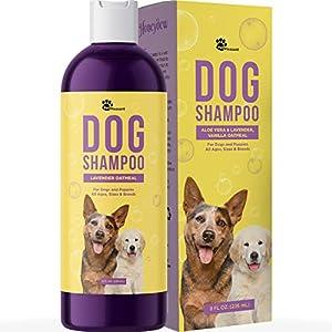 Best flea shampoo for dogs: Doghint's top choice