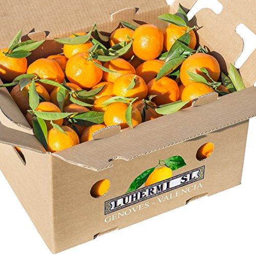 Mandarinen aus Valencia (Spanien). Gehäuse 15 kg