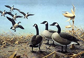 1958-1959 FEDERAL DUCK STAMP PRINT Artist Proof Edition print by Les Kouba 24