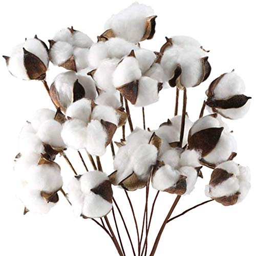 DomeStar Cotton Stems, Natural Dried Cotton 8 Packs Total 15 Bolls Cotton Sprigs...