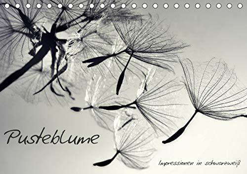 Pusteblume - Impressionen in schwarzweiß (Tischkalender 2021 DIN A5 quer)