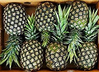Pineapple Fresh | Premium Quality | Cleaned & Sanitized Before Dispatch | Good Source of Vitamin C | Ready to Eat | Delici...