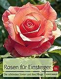 Rosen für Einsteiger: Die schönsten Sorten und ihre Pflege