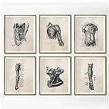 DLFALG Póster Vintage de anatomía humana, impresión de fisioterapia, lienzo médico, pintura de clínica, cuadro artístico de pared, decoración de oficina médica, 30x40cmx6 sin marco