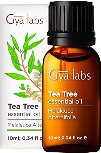Gya Labs Tea Tree Essential Oil for Skin Care and Hair Care...