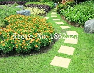 13 GETSO Bonsai 20 Pcs Orange Mandarine comestibles Pot dagrumes Nain Orange Tree de Plantes dint/érieur pour Jardin Plantes Non-OGM