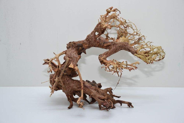 AQUARISTIKWELT24 Bonsai Tree L Original Photo No. 11059 Root Wood Aquarium Decoration Aquascaping Bonsai Tree Decoration Landscape Moss