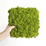 Nature Parts Moos•Moos Islandmoos Organic Moosbild ´Amalia´ (25x25cm) in Apfelgrün – Moosplatte – einzigartiges Gefühl trifft auf besonderes haptisches Gefühl
