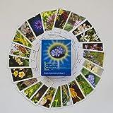 Bachblüten-Karten: Karten - Deutsch. Blüten als Chance und Hilfe: Kartenset mit allen 39 Bachbltenfotos