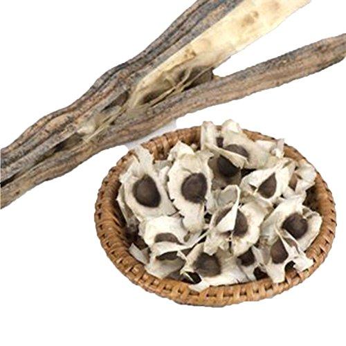 Lot de branches de moringa Tianfuheng avec 50 graines - Biologiques - Pour les quatre saisons 50Pcs Moringa Oleifera Seeds