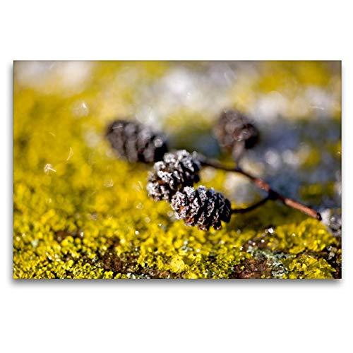 CALVENDO Premium Textil-Leinwand 120 x 80 cm Quer-Format Eiskristalle an Zapfen und Flechten, Leinwanddruck von Bild-erzaehler