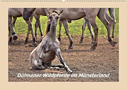 Dülmener Wildpferde im Münsterland (Wandkalender 2021 DIN A2 quer)