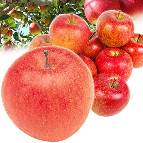 国華園 長野産 おまかせ赤りんご 10�s 林檎 果物