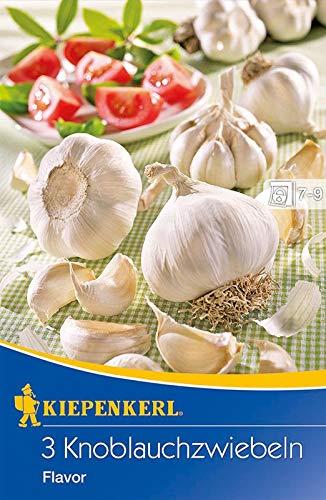 Kiepenkerl 611061 Knoblauchzwiebel Flavor (3 Stück) (Pflanzknoblauch)