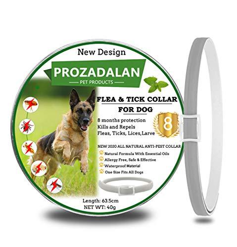 Collare Antipulci Cane, Collare per Cani Antipulci e Zecche Regolabile Impermeabile, Antiparassitario per Cani per Tutti i Tipi di Cani, 8 Mesi di Efficacia Protezione, 63cm Taglia Unica (1pack)