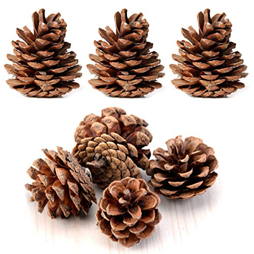Bulk Package of Natural Pinecones-24 Pack