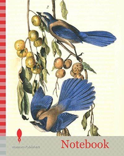 Notebook: Florida Jay. 1. Male. 2. Female. (Persimontree. Diospyros Virginiana.), Audubon, John James, 1785-1851