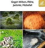 Pilz und Milben beim Hund – Juckreiz durch Pilzbefall und Milbenbefall 100 ml - 3