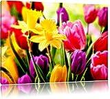 schöne Tulpen mit Narzissen Format: 80x60 auf Leinwand,