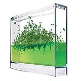 mostromania mini serra fai da te per erbe aromatiche - ecosistema - giardino da appartamento - kit botanico per piante indoor - prezzemolo - rucola - timo
