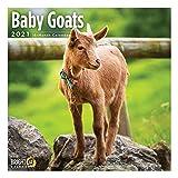 2021 Baby Goats Wall Calendar by Bright Day, 12 x 12 Inch, Cute Farm Animal