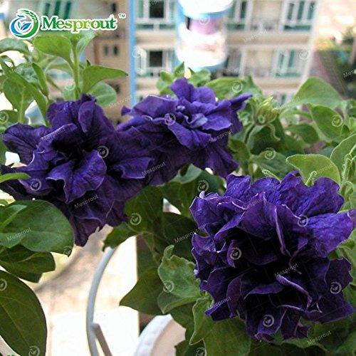 Nouvelle arrivee! 200PCS Pétales Double Petunia Graines pétunias Jardin Bonsai Balcon Petunia hybrida Flower Seed 9 espèces
