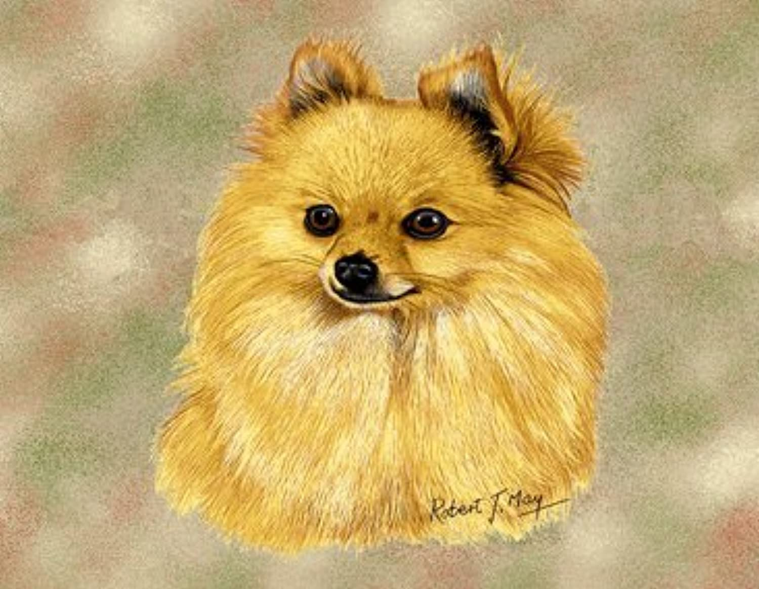 Pure Country 1147LS Pomeranian Pet Blanket, Canine on Beige Background, 54 by 54Inch by Pure Country