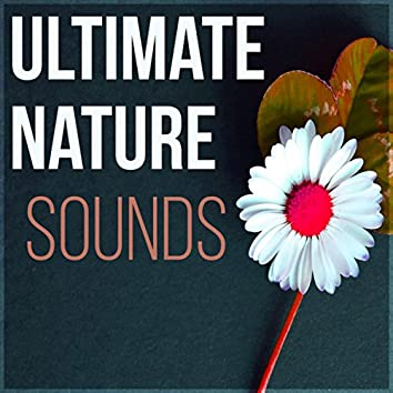 Ultimate Nature Sounds - Massage Therapy, Piano Music and Sounds of Nature Music for Relaxation, New Age Reiki