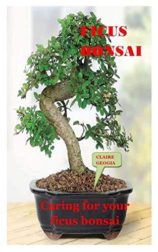 FICUS BONSAI: Caring For Your Ficus Bonsai