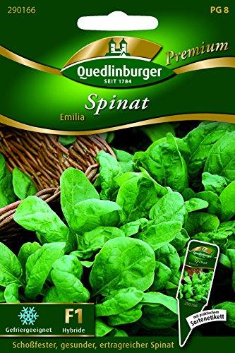 Spinat Emilia - Spinacia oleracea QLB Premium Saatgut Spinat und Mangold