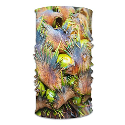 BDGAjdka Tropical Rainforest Vector Face Face Scarf Bandanas Neck Gaiter for Women Men, Half Balaclava, Magic Scarf, Unisex Multi-Functional Full-Coverage Tube Face Scarfs
