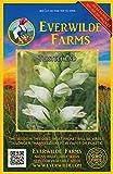Everwilde Farms - 500 Turtlehead Native Wildflower Seeds - Gold Vault Jumbo Seed Packet