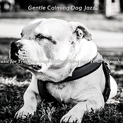 Dream Like Tenor Saxophone Solo - Vibe for Dogs