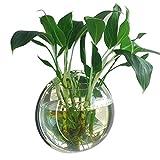 Acrílico Redonda de pared de techo Fish Bowl Acuario Tanque para peces de oro y Béta vegetal planta jarrón decoración pot, 29.5cm Diámetro