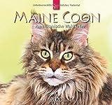 Maine Coon - Amerikanische Waldkatze: Original Stürtz-Kalender 2020 - Mittelformat-Kalender 33 x 31 cm