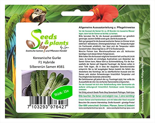 Stk - 15x Koreanische Gurke F1 Hybride Silbergrün Gemüse Samen #381 - Seeds Plants Shop Samenbank Pfullingen Patrik Ipsa